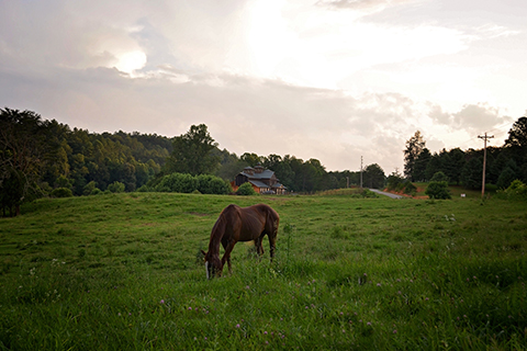 A brown horse grazes peacefully in a beautiful field at Appalachian Trail Rides at S&T Stables in Mineral Bluff, Georgia, where guests staying at Xplorie participating properties can enjoy a free One Hour Trail Ride.