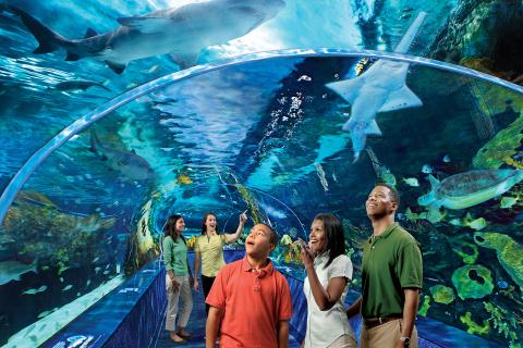 Ripley's® Aquarium of the Smokies
